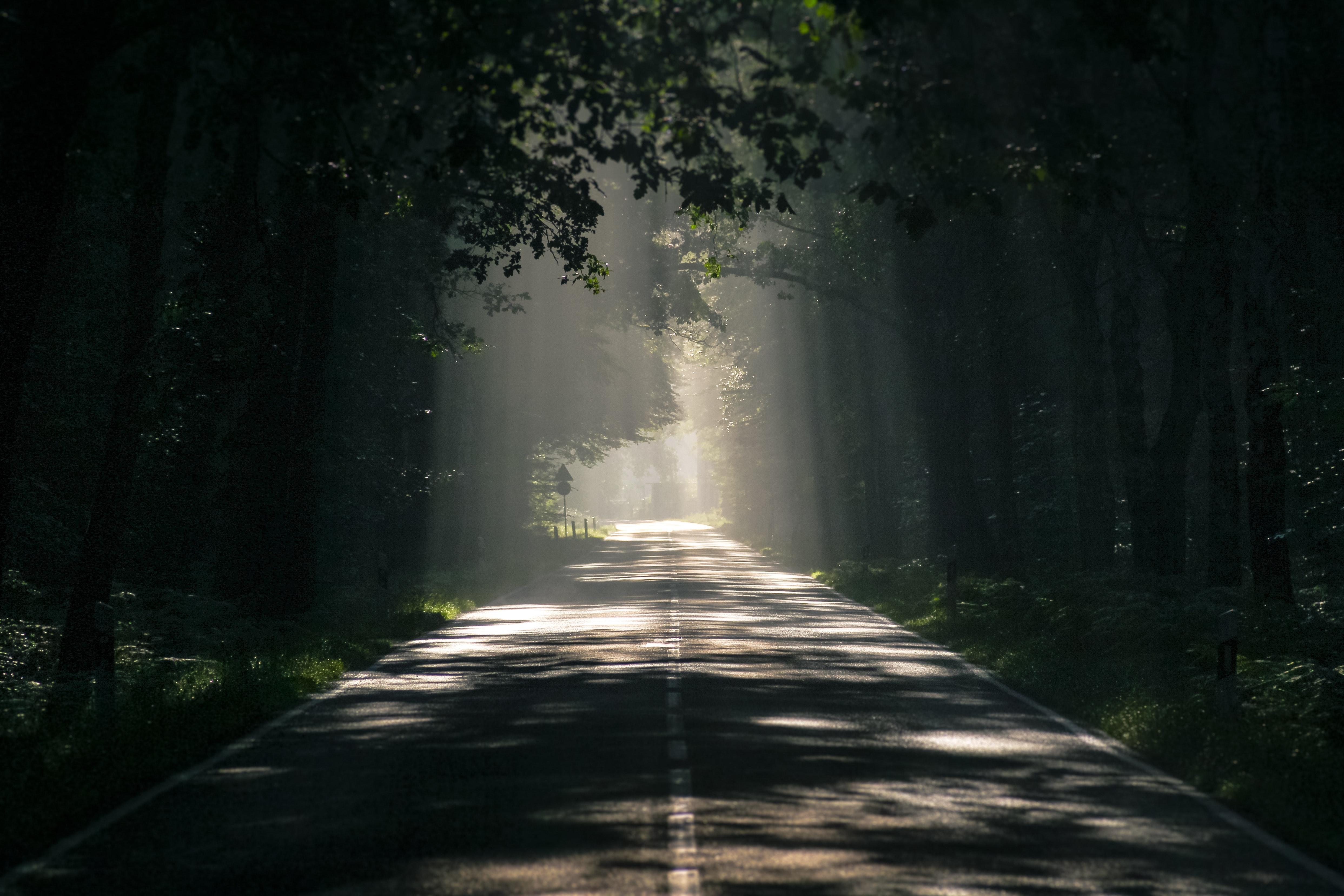 Solen lyser igenom träd och belyser en väg.