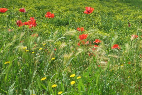 Blommor på äng